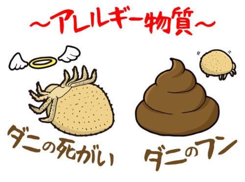 ダニの死骸や糞はアレルゲンになる。